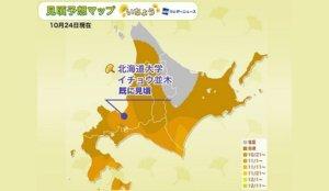 银杏前线【北海道、东北】