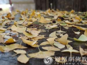 佛教故事:你能从捡落叶中悟到什么吗?