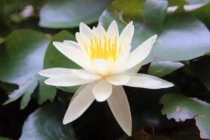 佛教常识丨持诵大悲咒的功德利益