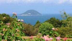 花儿正绽放:缤纷的「能古岛海岛公园」