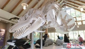学习世界自然遗产自然生态:知床国立公园罗臼游客中心