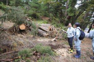 第19号台风造成日本222件文化遗产受灾