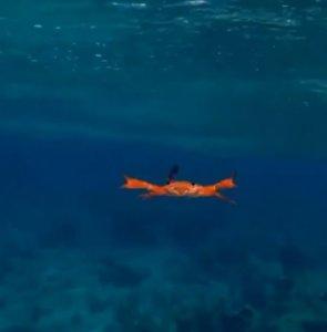 螃蟹怎么游泳?超奇葩「泳姿」画面曝光万人笑翻:超疗愈