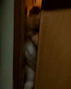 想蹭饭!松狮犬躲门缝偷看主人进食讨吃不成用脸强行开门