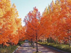 感受红叶魅力!日本赏枫最强攻略
