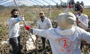 台湾志愿者奔赴日本宫城台风灾区