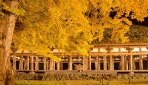 喜多方市「新宫熊野神社长床」夜间点灯