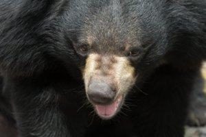 日本一家诊所仓库惊见两头熊呈冬眠状态