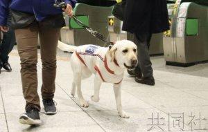 新干线东京站开展奥运反恐实证试验 安排嗅探犬巡逻