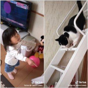 喵皇沦为奴才!猫保母帮小萝莉拿气球贴心画面网疯传