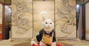 京都比睿山「猫猫寺」 猫奴必访!