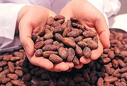 カカオ豆のヒミツ cacao lab.|フロアガイド|nicoe(ニコエ) | 浜北スイーツ・コミュニティ(静岡県浜松市)HPから引用