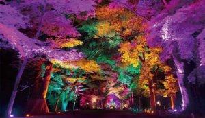 teamLab和香川县献上年度奇幻巨作!今夜一起梦游米其林三星景点「栗林公园光之祭」