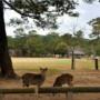 日本奈良观光客锐减鹿群饥饿勿拿饼逗弄
