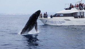 【那霸市】赏鲸船活动