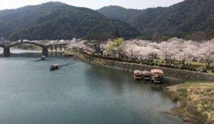 【山口】春季游览船「樱花小舟」