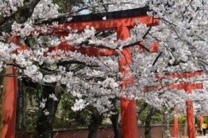 竹中稻荷神社╱京都