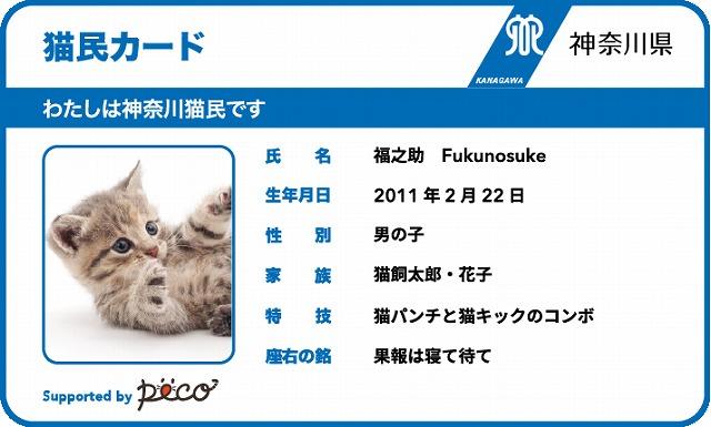 飼い主と犬・猫とのかけがえのない絆「マイクロチップ 犬民カード・猫民カード」【連載:アキラの着目】