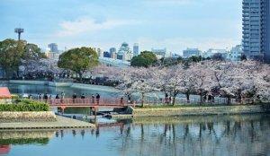 2020大阪赏樱景点 毛马樱之宫公园