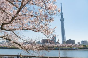 一抬头就与晴空塔对望!浅草「隅田公园」