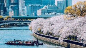 樱花季即将来临,大阪这里美成天堂