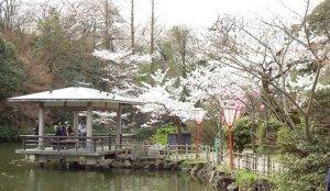2020北陆赏樱景点 富山县高冈古城公园