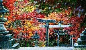 造访能量景点「府中八幡神社」与当地人信仰中心「首无地藏」