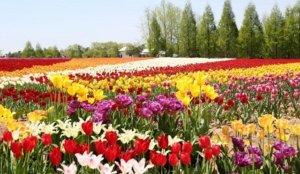 繁花绽放的梦幻仙境,西日本最大花园「世罗高原农场」