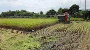 日本农水省通过粮食自给率45%目标草案