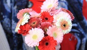 花系少年少女必体验!摘非洲菊与花束制作