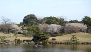2020九州樱花景点 熊本县水前寺成趣园