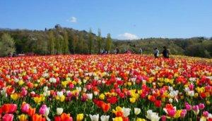 长冈浪漫后花园「国营越后丘陵公园」