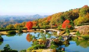 天空内的日本庭园「东林苑」古朴茶屋喝现泡抹茶
