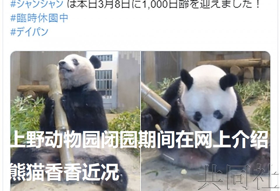 上野动物园闭园期间在网上介绍熊猫香香近况