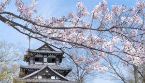 2020北陆赏樱景点 新泻县高田公园
