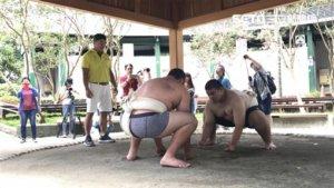 相扑运动从日本传来!台语读音怎么念?真相曝光网惊呆