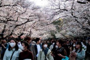 赏樱造成疫情扩散?日本东京连两日增百例
