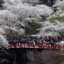 日本的「黄金周」是什么样的假期?黄金周假期和日本节日文化介绍