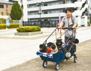 宠物商机大日本饲主一年为爱犬花2,780美元