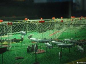【北海道根室】走入鲑鱼的生命时光机「鲑鱼科学馆」