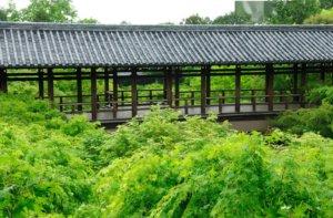 """京都""""新绿""""不可错过的三个地方"""
