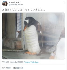 日本水族馆竟有「腹肌」企鹅!照片曝…吸破万网友狂按赞
