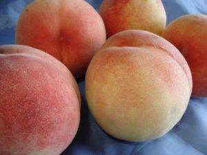 和歌山必吃名产水果「荒川桃」