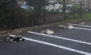猫咪也要保持社交距离!三猫占停车位萌翻全网