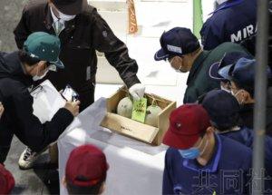 北海道夕张甜瓜今年首拍成交价暴跌
