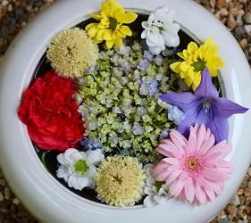 【京都】华丽如盆栽的花手水「东福寺塔头胜林寺」