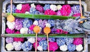 【京都】关西第一的花手水寺「柳谷观音杨谷寺」