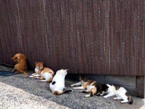 涉用毒饵登猫岛杀猫日本8旬男性遭函送