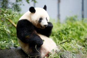 上野动物园限制人数重新开放 熊猫馆暂禁拍照