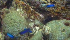 研究发现核电站排放温水曾使热带鱼定居